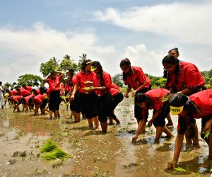 Students learn rice cultivation