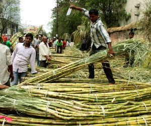 Government ups sugarcane FRP to Rs 275