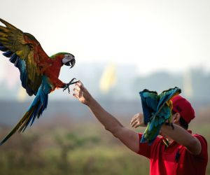 INDONESIA TANGERANG MACAW PARROTS