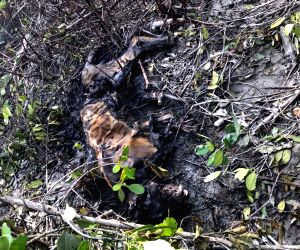 Tiger's Decomposed Body Found In Bengal's Sundarbans