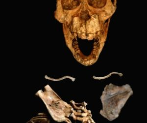 Hominins walked like modern humans, climbed like apes: Study