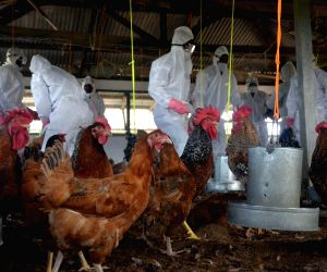 Bird flu virus detected in Agartala