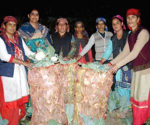 Himachal Govt Providing Major Boost To Natural Farming