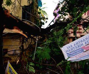 Rains-thunderstorm flood streets, uproot trees