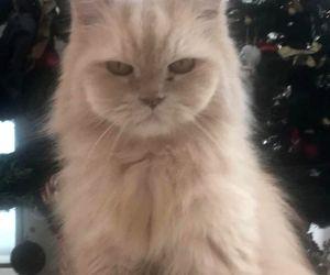 Tiger Shroff mourns loss of pet cat JD
