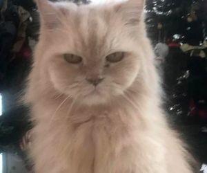 Free Photo: Tiger Shroff mourns loss of pet cat JD