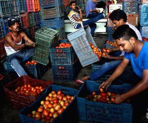 File Photo: Tomatoes