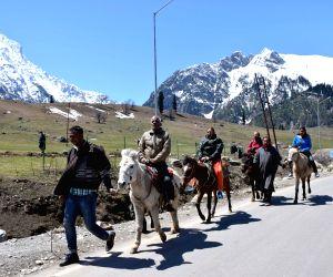 Tourists Enjoy Mule Ride