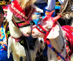 CHINA XINJIANG HAMI GOAT FAIR