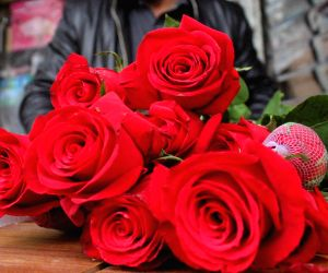 Valentine's Day 2020: Week of love kicks off with Rose Day