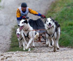 Venek (Hungary ): FISTC Cart European Championships in Venek