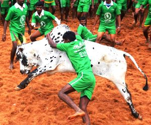 villagers-try-to-tame-a-bull-during-jallikattu
