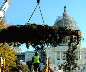 Washington D.C: Capitol Christmas Tree