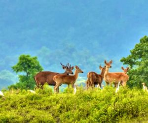Waterfowl numbers up 173%, species rise to 112 in Assam's Kaziranga