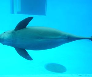 CHINA WUHAN FINLESS PORPOISE PROTECTION