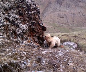 CHINA-QINGHAI-QILIANSHAN-WILD ANIMAL