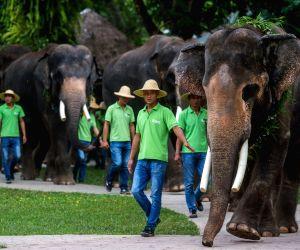 CHINA-YUNNAN-ELEPHANT