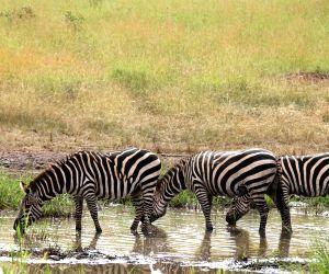 RWANDA-AKAGERA NATIONAL PARK-WILDLIFE