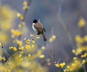 China-spring-bird