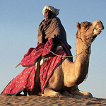 Camel Safari Adventure Tour