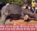 बीमार हाथी को शादी समारोह के लिए ले जाया गया 200 किलोमीटर दूर, ट्रक से वापसी में हुई मौत