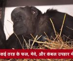 चिंपांजी 'रिता' हुई 59 साल की, बच्चों के साथ मनाया जन्म दिन