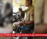 Karnataka: Bus driver allows monkey to get behind wheels
