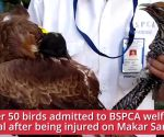 Makar Sankranti: 50 Birds injured by kite flying 'Manjha' admitted to Animal welfare hospital