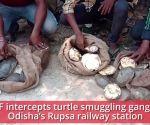 Odisha: RPF intercepts gang smuggling 45 turtles to sell in Kolkata