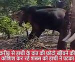 केरल: फोटो खींचने की कोशिश कर रहे शख्स को हाथी ने पटका