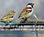 विश्व गौरैया दिवस: दिल्ली में गायब हुई राज्य पक्षी की चहचहाहट