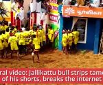 Viral video: Jallikattu bull strips tamer of his shorts, breaks the internet