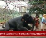Watch: Elephants enjoy bath at Thekkampatti rejuvenation camp