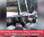Watch: Monkey snatches bag containing Rs 57,000