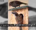World Sparrow Day: आखिर कहां ओझल होती जा रही है गौरैया