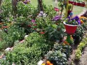 Annual Gardening exhibition at Raj Bhawan in Lucknow, Major Prashant Singh's family bagged 52 prizes