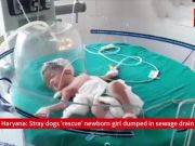 Caught on cam: Stray dogs 'rescue' newborn girl dumped in sewage drain in Haryana