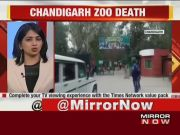 Chandigarh: Man mauled to death by two lions inside Chhatbir Zoo