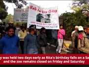 Chimpanzee 'Rita' turns 59