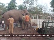Confined for 20 years, 2 elephants shifted to Visakhapatnam zoo