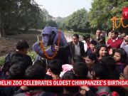 Delhi zoo celebrates oldest Chimpanzee's birthday
