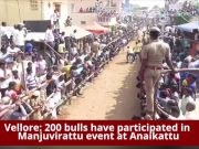 Jallikattu-like bull taming sport held in Vellore