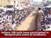 Jallikattu-like bull taming sport held in Vellore