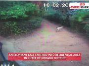 Karnataka: Elephant calf enters Kodagu's residential area
