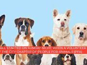 Kerala: Pomeranian had 'illicit affair', Owner abandons dog