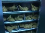 Live worms found in kfc chicken, outlet closed