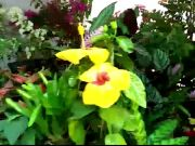 Mumbai: Flower & plant show at Marine Drive attracts large number of visitors