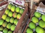 Navi Mumbai: Fresh Alphonso mangoes arrive at APMC
