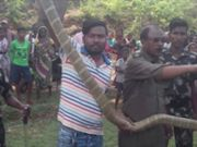 Odisha: 16-ft-long king cobra rescued from Baripada forest division