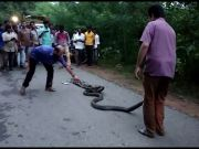On cam: 13-ft king cobra rescued in Mangaluru